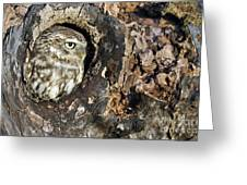Little Owl 4 Greeting Card