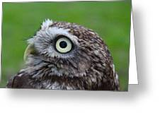 Little Owl Greeting Card by Ed Pettitt