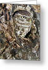 Little Owl In Hollow Tree Greeting Card