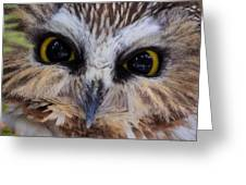 Little Owls Greeting Card