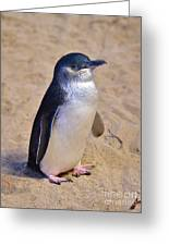 Little Penguin Greeting Card