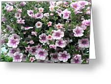 Little Petunias Greeting Card