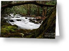 Little Pigeon River In The Smokies Greeting Card
