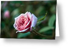 Little Pink Rose Greeting Card