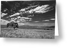Little Prarie Big Sky - Black And White Greeting Card