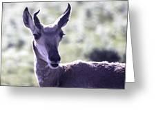 Little Pronghorn Greeting Card