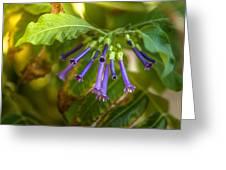 Little Purple Bells Greeting Card