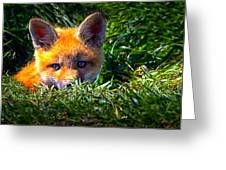 Little Red Fox Greeting Card by Bob Orsillo