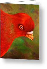 Little Red Greeting Card by Terry Jackson