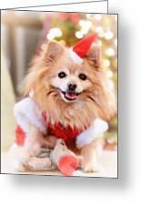 Little Santa Claus Greeting Card