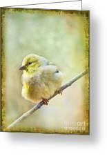 Little Softie Gold Finch - Digital Paint Greeting Card