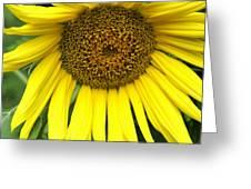 Little Sunshine Greeting Card