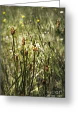 Little Weeds Greeting Card
