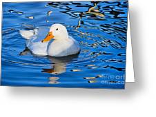 Little White Duck Greeting Card