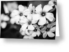 Little White Flowers. Greeting Card by Slavica Koceva