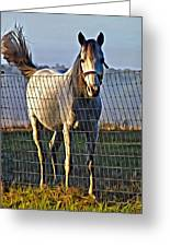 Little White Pony Greeting Card