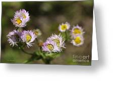 Little Wild Flowers Greeting Card