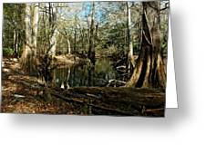 Little Withlacoochee River Greeting Card