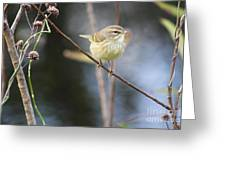 Little Yellow Bird In The Glades Greeting Card