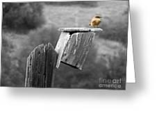 Little Yellow Bird Greeting Card