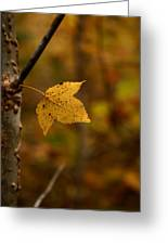 Little Yellow Leaf Greeting Card