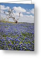 Live Bluebonnets And Dead Tree Greeting Card