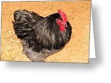 Live Chicken - 2011 Houston Livestock Show Greeting Card