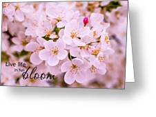 Live Life In Bloom Greeting Card
