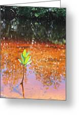 Live Mangrove Tree Greeting Card