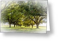 Live Oak Journey Vignette Greeting Card