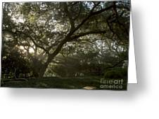 Live Oak Light Streaming Through Fog Greeting Card
