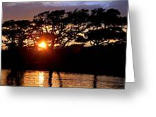 Live Oak Silhouette Greeting Card