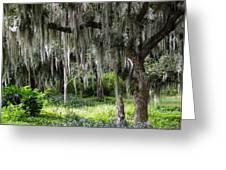 Live Oak Tree II Greeting Card