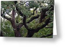 Live Oak Tree Greeting Card