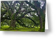 Live Oak Trees Greeting Card