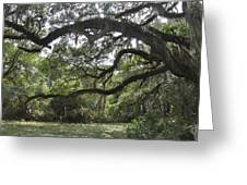 Live Oaks And Spanish Moss A Greeting Card