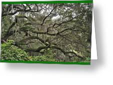 Live Oaks And Spanish Moss B Greeting Card