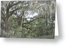 Live Oaks And Spanish Moss C Greeting Card