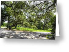 Live Oaks Dripping With Spanish Moss Greeting Card