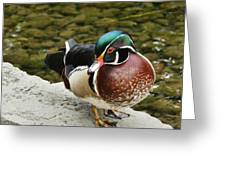 Live Pond Ornament Greeting Card