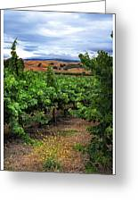 Livermore Vineyard 1 Greeting Card