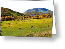 Livestock Grazing In Colorado Greeting Card