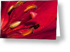 Living Inside A Lily Greeting Card