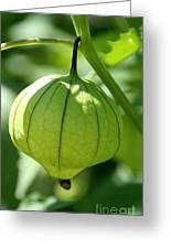 Living Lantern Greeting Card