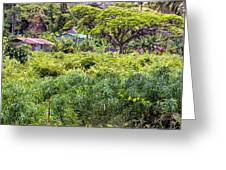 Living Off The Grid In The Waipi'o Valley Greeting Card