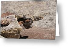 lizard from central Madagascar Greeting Card