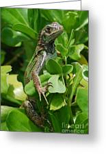 Lizard In Hedge Greeting Card
