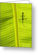 Lizard Leaf Greeting Card by Tim Gainey