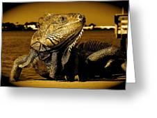 Lizard Sunbathing In Miami II Greeting Card