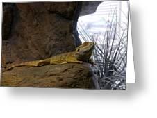 Lizard Of Oz Greeting Card
